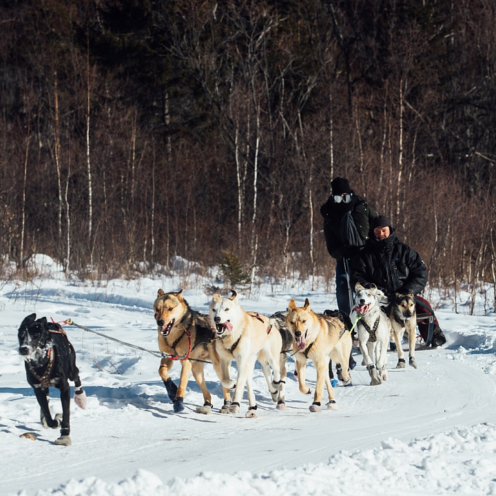 Dog Sledge Tour from Listvyanka to the 105th Meridian